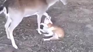 Dog and Deer are the Best of Friends