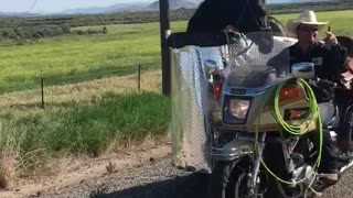 Man Transports Horse In A Sidecar Of A Motorcycle He Has Made