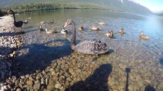 Nelson Lake, New Zealand