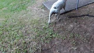 chevy the loving dog