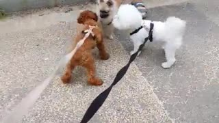 Dogs showing interest in other dogs