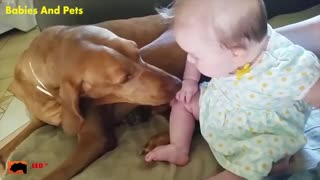 Baby and Dog Playing Funny Video