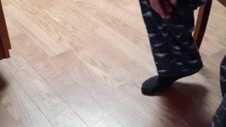 Bo Daisy Playing fetch