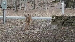 A Conversation With a Deer