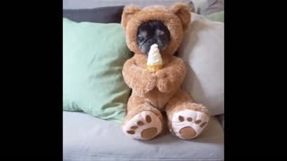 funny pets from around the country