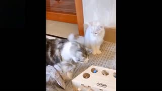 Cutest pets ever that make you laugh