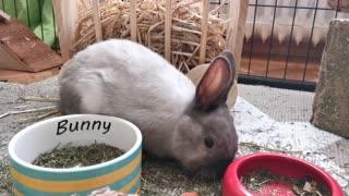 cute bunnies eating their feed