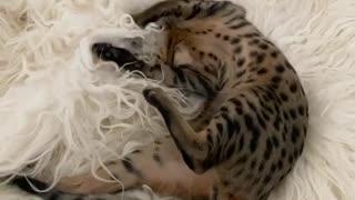 Cute kitten enjoys playtime