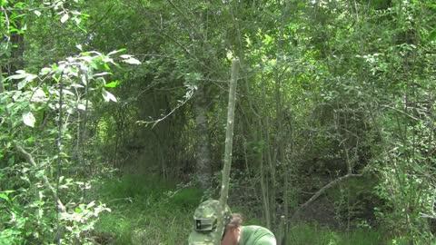Yaupon - The Go To Tree For Many Needs