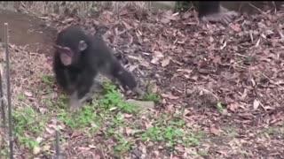 Animals Getting Shocked best