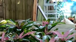 Advanced Bromeliads 4
