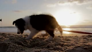 Adorable & lovely dog