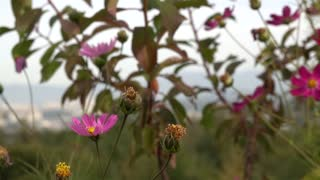 Beautiful flowers in autumn 6