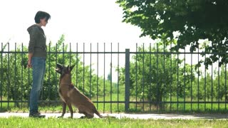The Top 10 Commands you should teach your dogs.