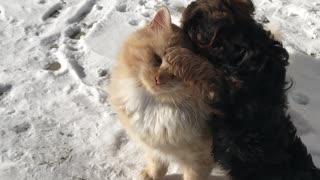 Kitty Enjoys Company of Playful Puppy