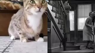 Cat watching scary movie scene 😆