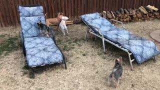 Dogs Home for Christmas