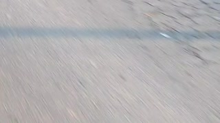 Neighborhood Dog Greets Cyclist Every Morning