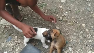 Dogs playing part 2