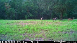 Trail Camera 6