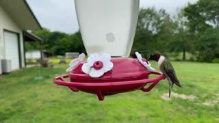 Stunning Up-Close Footage Captures Hummingbirds At Feeder☺