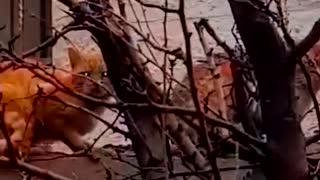 Самая длинная очередь из котов)