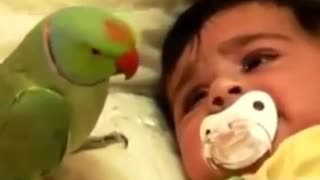 The parrot tries to silence the crying child that he is very affectionate
