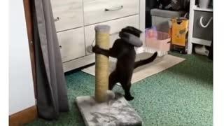 Funny cat.!