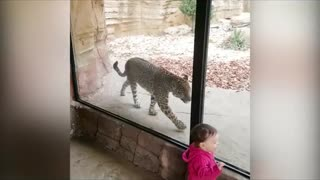 funny babies and animals