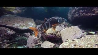 Underwater, Seal, Sea Animals, Scuba Diving