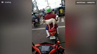 Motociclista transporta cão de forma perigosa