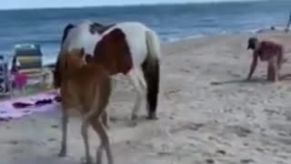Woman kicked by wild horse after hitting it with a shovel