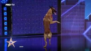 DOG! TALENTED Câinele care a uimit toata sala | Romania's Got Talent