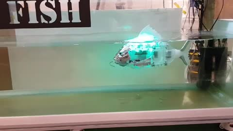 Will robots take over the sea world?