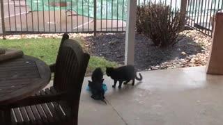 Ebony the feral cat had kittens.