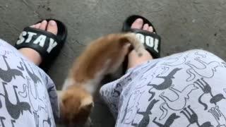 Cute kitten wants some attention