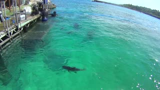 Xel-Ha Park Lagoon Mexico Carribean Part 19