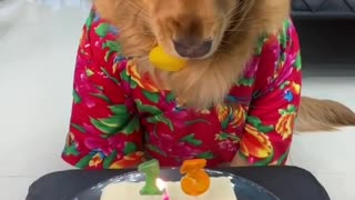 Funny dog , Happy birthday 13yeas, love animals