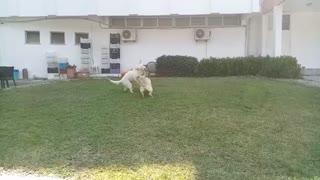 Funny dogs nice