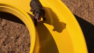 Little Legs Work Hard to Climb Slide
