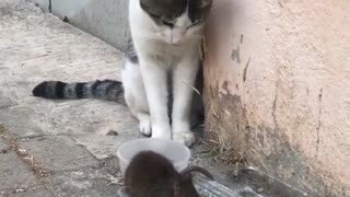 Cat vs Mouse - Fighting