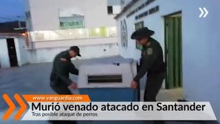 Murió venado atacado en Santander