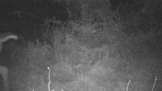 PA 8 point looks a camera