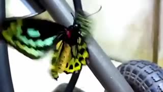 EPIC!! This Close Up Slow Motion of butterfly will leave you in AWE.
