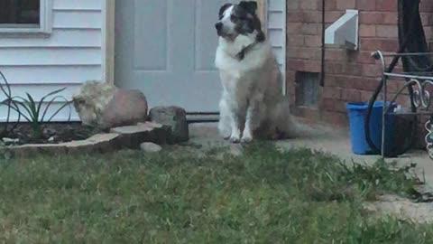 Jax on Guard Duty!