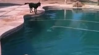 This amazing dog can dive more than a human!