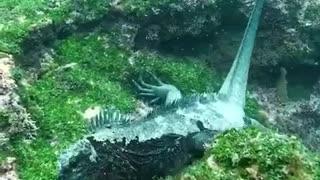 Godzilla in real life