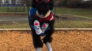 Dog wearing sunglasses, red antlers, red sweater, and socks swings at a park