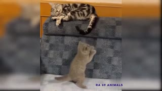 LAUGHING 6 MINUTES VIDEO FUNNY CATS