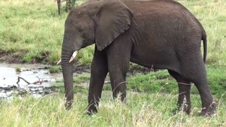 Elephant living to forest